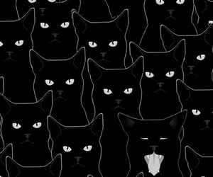 cat, black, and wallpaper image