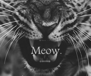 animals, kitty, and meow image