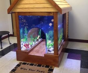 dog, fish, and house image