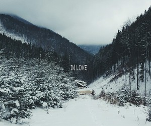 snow, forest, and nature image