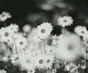 black and white, tumblr, and flowers image