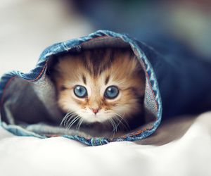 adorable, cat, and meow image