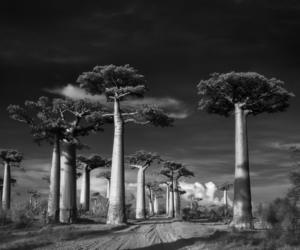 trees, beth moon, and ancient trees image