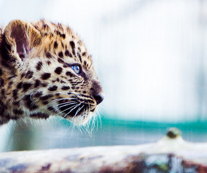 animal, little, and cute image