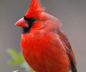 animal, bird, and red image