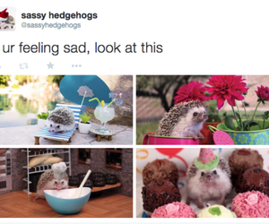 happy, cute, and hedgehog image