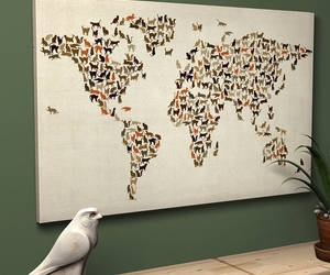 cats, creative, and map image
