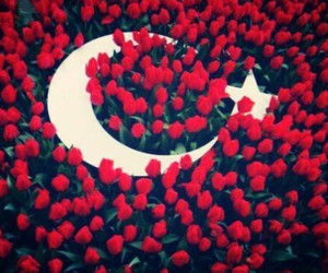 flower, red, and Turkish image