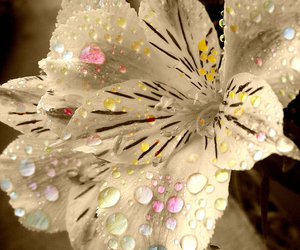 drops, water, and flowers image