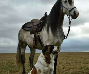 best friends, nature, and horsemanship image