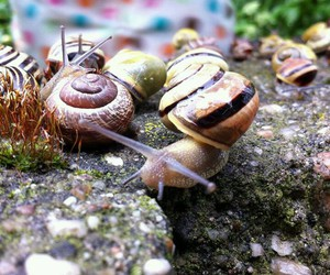 snails, slow, and slowly image