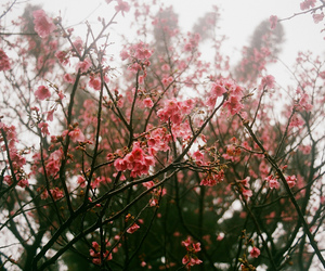 floral, flowers, and fog image