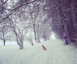 beautiful, dog, and forest image