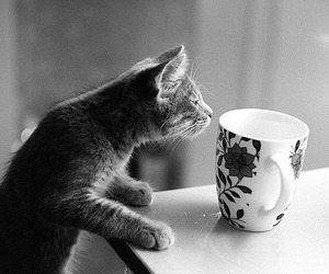 cat, cup, and animal image
