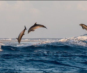 beautiful and dauphins image