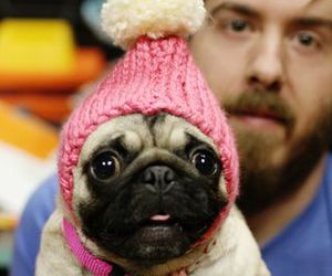 dog, cute, and hat image