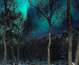 snow, nature, and night image