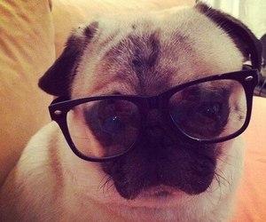 dog and glasses image