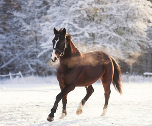 horse, winter, and brown image