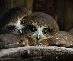 look, blick, and owls image