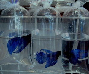 fish, blue, and grunge image