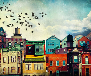 bird, house, and city image