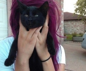 cat, hair, and girl image