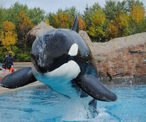 splash, whale, and cute image