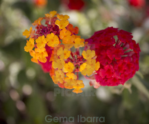 beatiful, flora, and flowers image