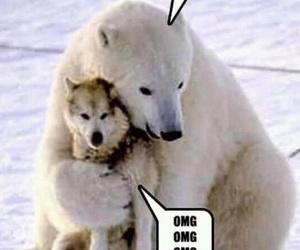 funny, Polar Bear, and lol image