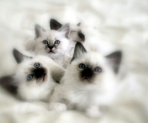 animals, cute cat, and puppies image