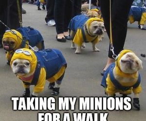 minions, funny, and dog image