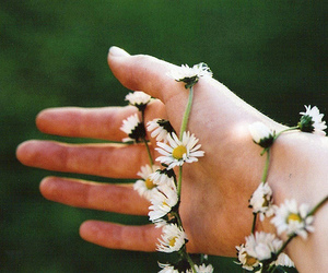 flowers, girly, and indie image