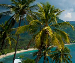 beach, palm trees, and palms image