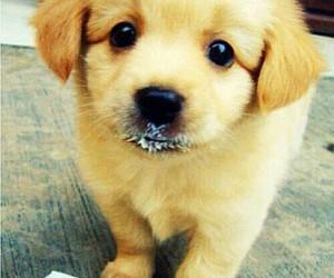 pretty cute dogs image
