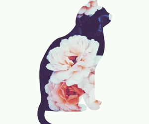 cat, background, and flowers image