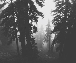 forest, black, and nature image