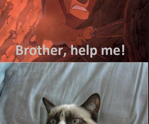 funny, disney, and grumpy cat image