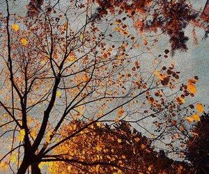 autumn, beautiful, and blue image