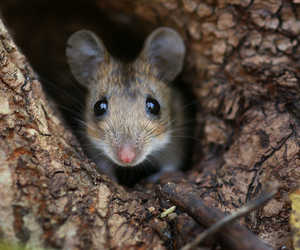 eyes, little, and mouse image
