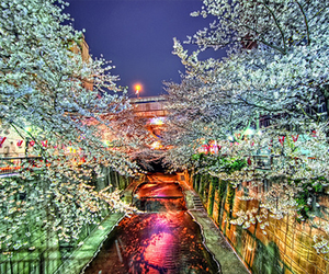tree, cherry blossom, and river image