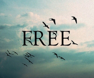 free, bird, and sky image