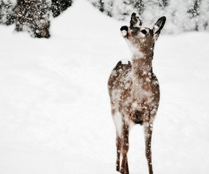 animal, winter, and cute image