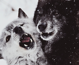 adorable, black, and winter image