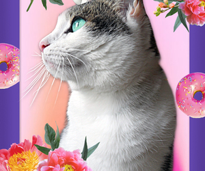 candy, pink, and cat image