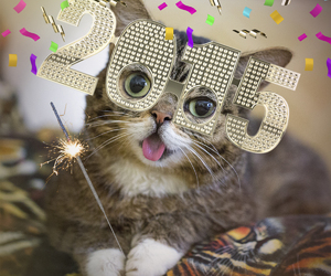 2015 and cat image