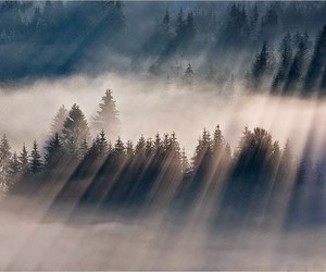 forest, sun, and it mists image