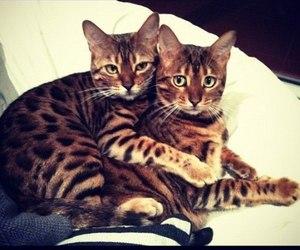 cat, hug, and animal image