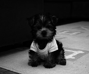 dog, so cute, and ♥ image