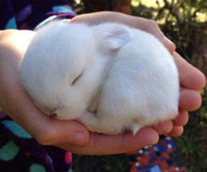 lapin, pets, and ♥ image